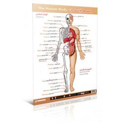 لوحة جسم الإنسان -متقدم
